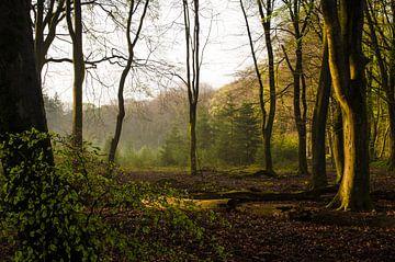 Zonsondergang in het bos sur Rianne Hazeleger
