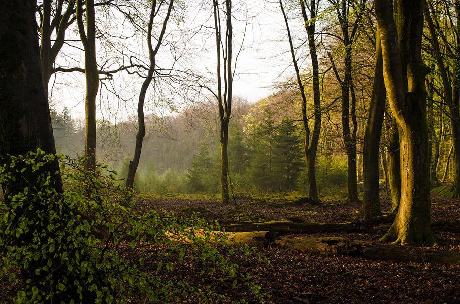 Zonsondergang in het bos van Rianne Hazeleger