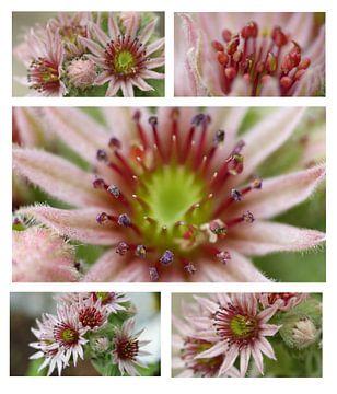 Collage roze bloemen van Gonnie van Hove