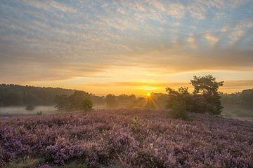 Brunssummerheide strahlender Sonnenaufgang von John van de Gazelle