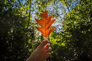 De herfstzon en het blad