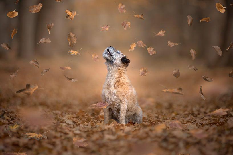 Fallende Blätter von GoWildGoNaturepictures