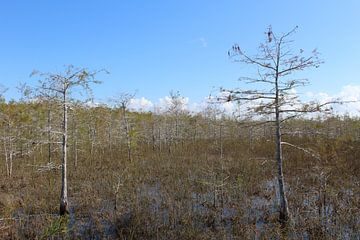 Everglades Nationaal Park Florida Verenigde Staten van Martin van den Berg Mandy Steehouwer