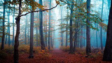 Bos in de herfst van Martin Wasilewski