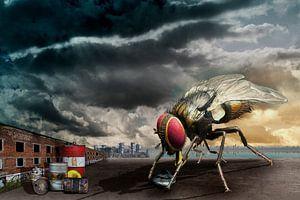 De nieuwsgierigheid van de huisvlieg van Erich Krätschmer