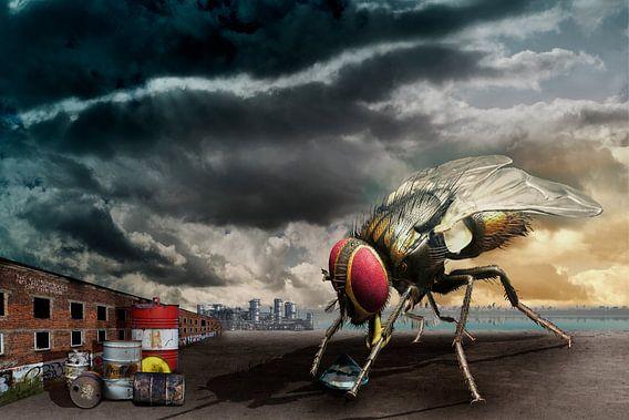 De nieuwsgierigheid van de huisvlieg