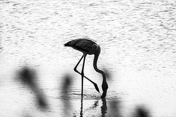 Flamingo - Curaçao von Rowenda Hulsebos