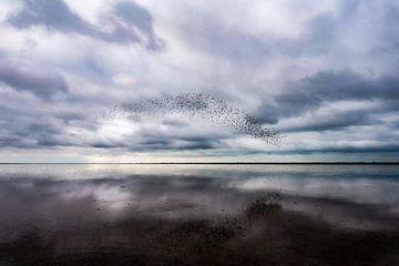Vögel über dem Wattenmeer von K Top