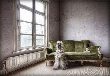 Hond in verlaten huis van