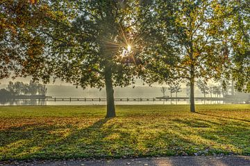 Rotterdam: Herfst bij de Kralingse Plas van Frans Blok