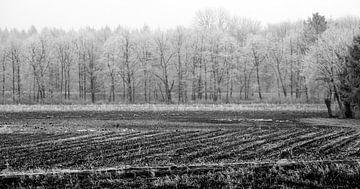 Winterbos van Thomas Jäger