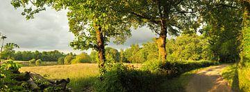 Landschaft mit Bäumen von Corinne Welp