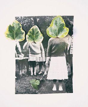 Collage Hedra von Karin vanBijleveltFotografie