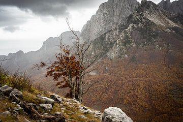 Herbst in den Bergen Albaniens von Ellis Peeters