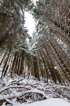 Winterbos van Wouter van Woensel