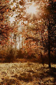 Herbstlicher Wald mit untergehender Sonne von Amber den Oudsten