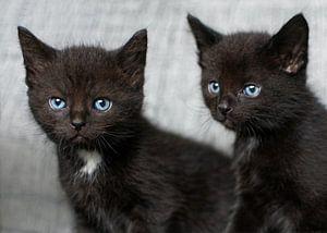 Twee kleine zwarte kittens van