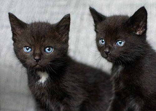 Twee kleine zwarte kittens