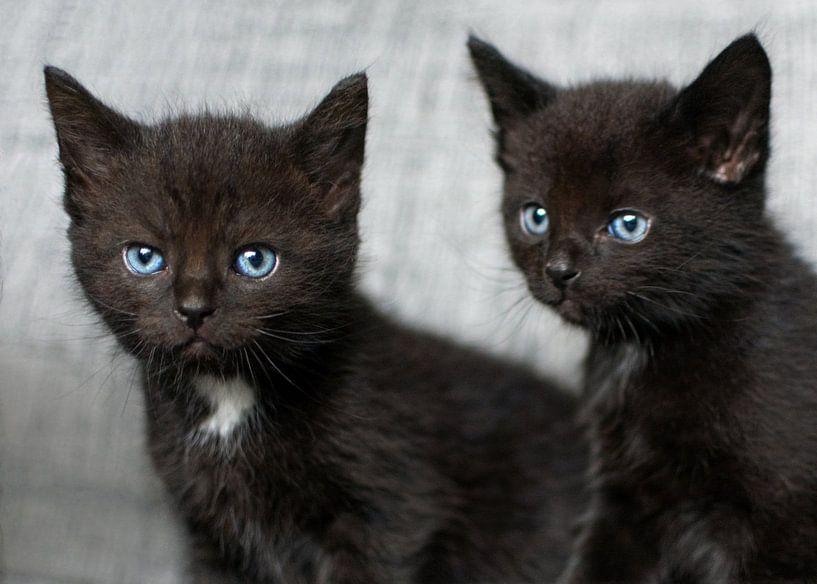 Twee kleine zwarte kittens van Christa Thieme-Krus