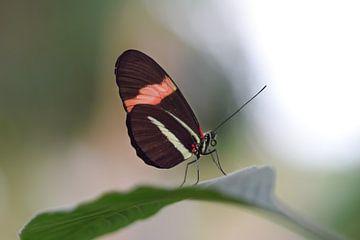 Kleurrijke vlinder op een groen blad van Kim de Been