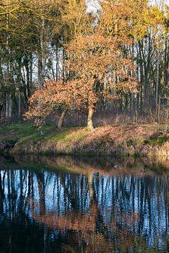 refelctie in het water van Compuinfoto .