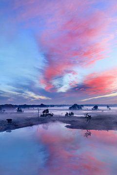 Rode en blauwe hemel tijdens zonsopgang op een mistige wetland_3 van Tony Vingerhoets