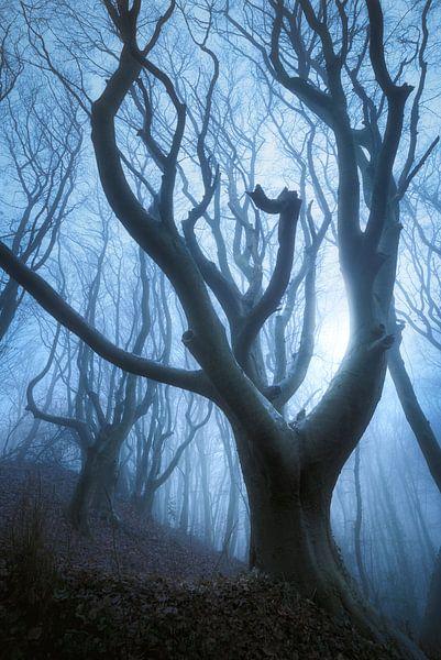 Evil Forest von Daniel Laan