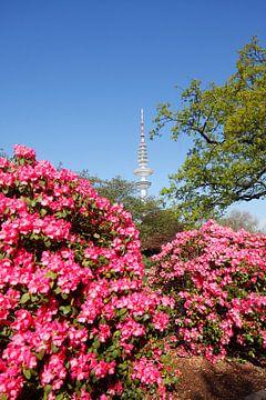 Tour de télévision, fleur de rhododendron, jardin japonais, Hambourg, Allemagne sur Torsten Krüger