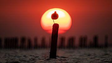 Zonsondergang Waddenzee met een vogel op een paal :) van Martijn van Dellen