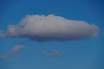1 Ooievaar in haar vlucht onder de witte wolk in de blauwe lucht van wil spijker