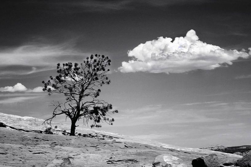 Canyonlands. Utah von Peter Bongers