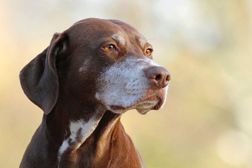 Hund von Heiko Lehmann