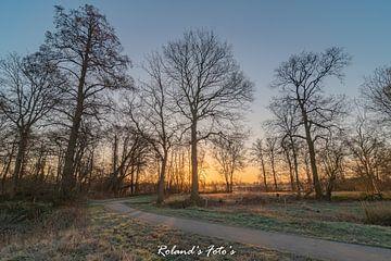 Majestueuze Bomen van Roland's Foto's