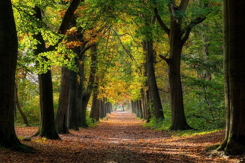 Mooie zonnige herfstdag in het bos von Bram van Broekhoven