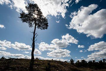 Boom op Heuvel in het Leersumse Veld, Leersum sur John Verbruggen