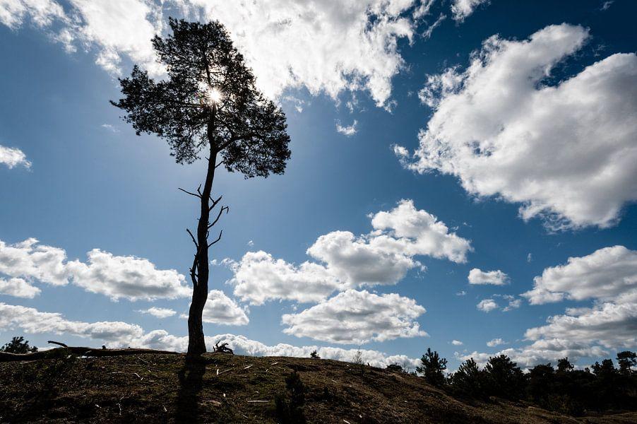 Boom op Heuvel in het Leersumse Veld, Leersum