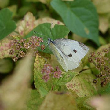 Der Schmetterling auf dem Blatt von Elke Dag Een Foto
