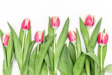 Rosa Tulpen in einer Reihe