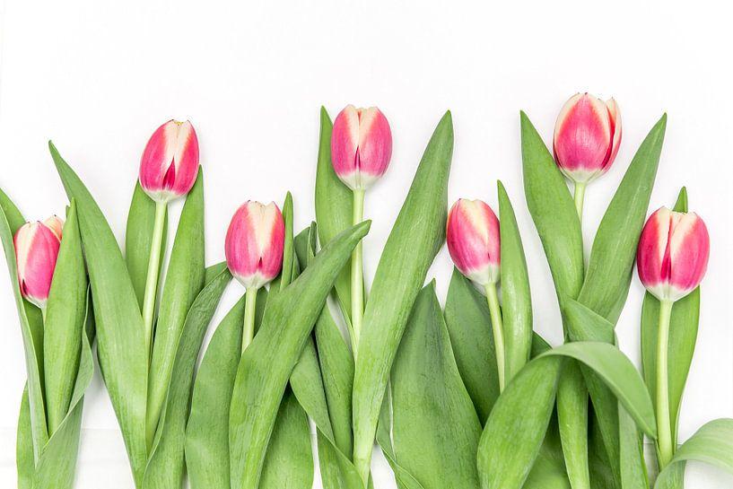 Roze tulpen op een rij van Ratna Bosch