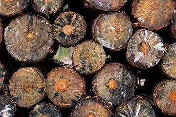 Prachtige patronen in een houtstapel in het bos van Connie Posthuma