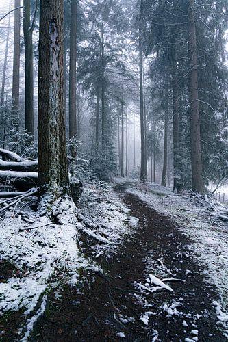 Een wandeling door een winters bos