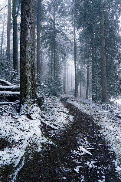 Een wandeling door een winters bos van Albert Lamme