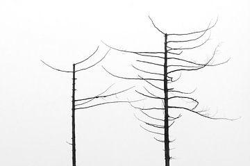 dode bomen van Chris Alberts