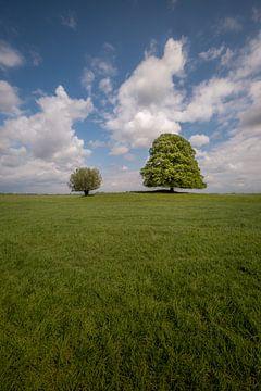 Zwei Bäume in weitläufiger Landschaft von Moetwil en van Dijk - Fotografie