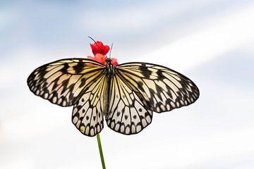Papier Schmetterling von Brigitte Mulders