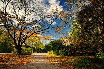 Autumn comes van Lex Schulte