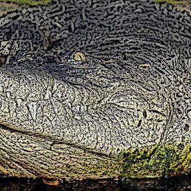 Krokodil van Jose Lok
