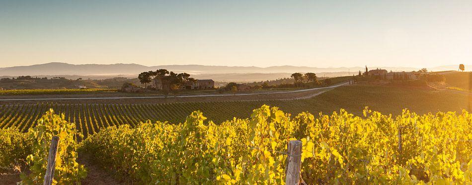 Wijnranken in de Toscaanse heuvels - panorama