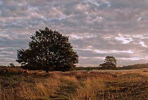 Rural Holland III
