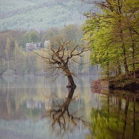 Baum im See von Jürgen Schmittdiel Photography